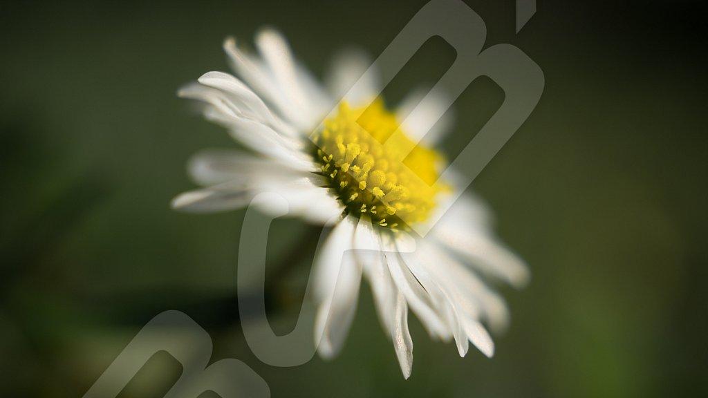 BabXIII-07058.jpg